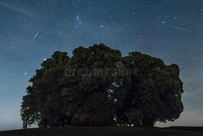 Estrellas de tiroteos sobre árboles foto de archivo