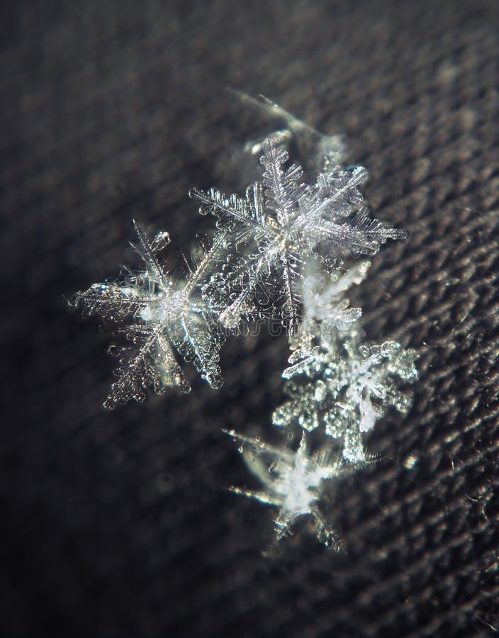 Estrellas del blanco de los copos de nieve en el fondo negro imágenes de archivo libres de regalías