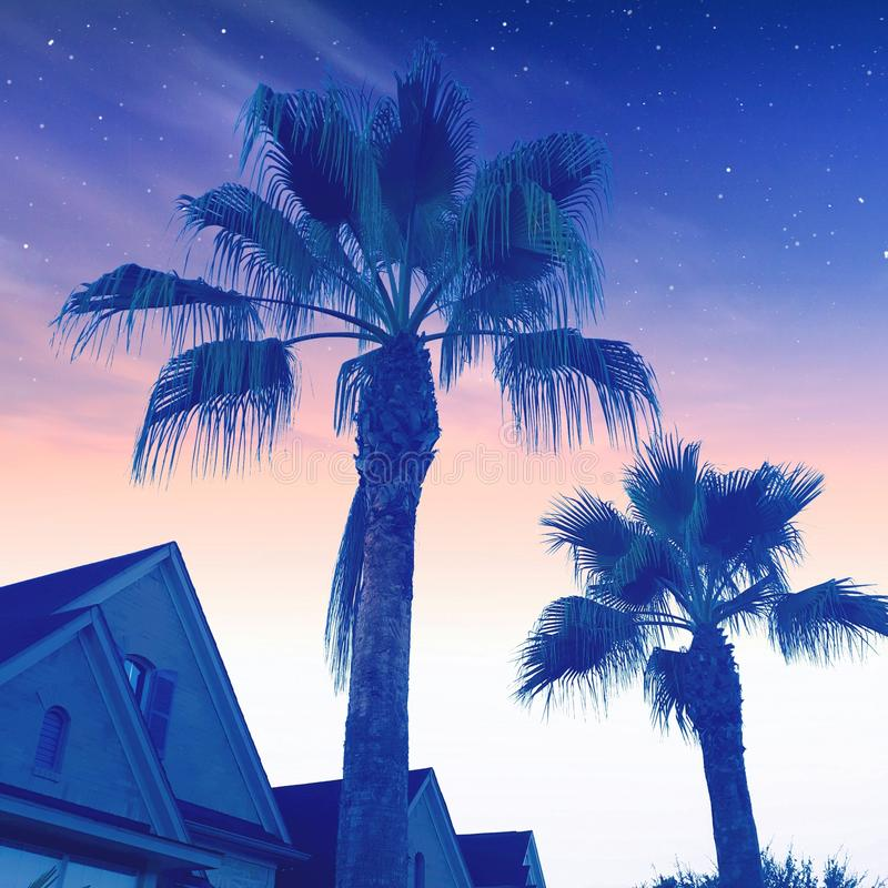 Estrellas del cielo de la mañana de Tejas de las palmeras foto de archivo