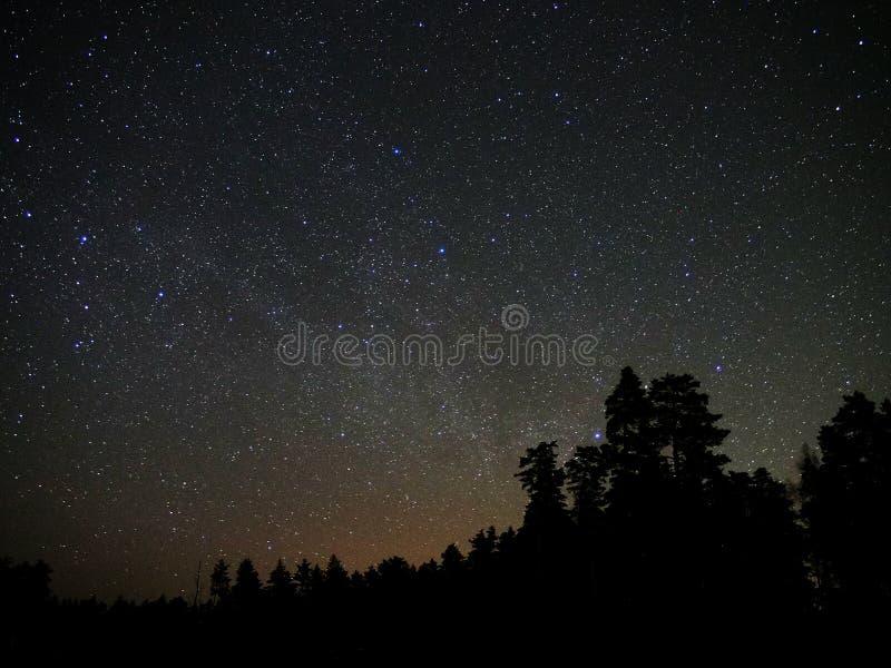 Estrellas del universo y atmósfera del bosque de la noche imágenes de archivo libres de regalías