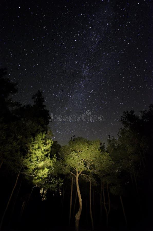 Estrellas en el bosque fotos de archivo libres de regalías