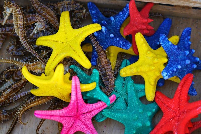 Estrellas y seahorses cogidos en Creta imágenes de archivo libres de regalías