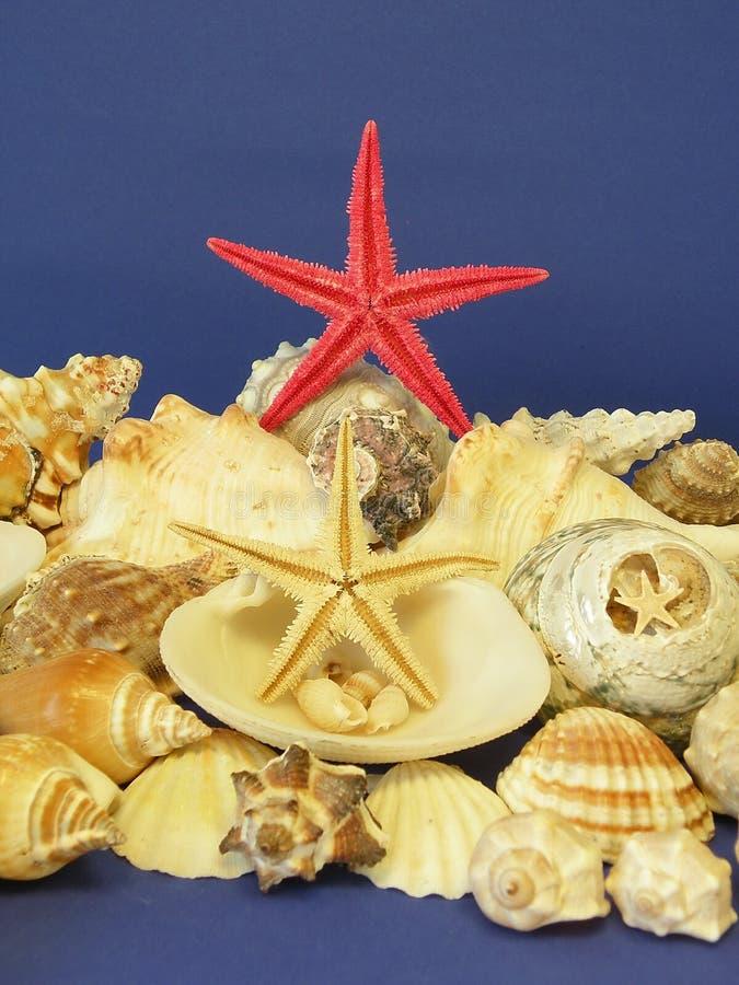 Estrellas y shelles de los pescados imagen de archivo libre de regalías