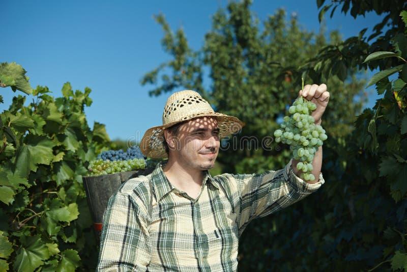 Estremità da portare di Vintager in pieno dell'uva immagini stock libere da diritti