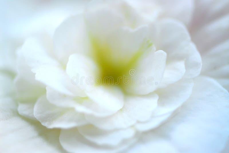 Estremo a macroistruzione del fiore fotografia stock libera da diritti