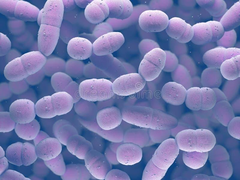 Estreptococo bacterias de Pneumoniae libre illustration