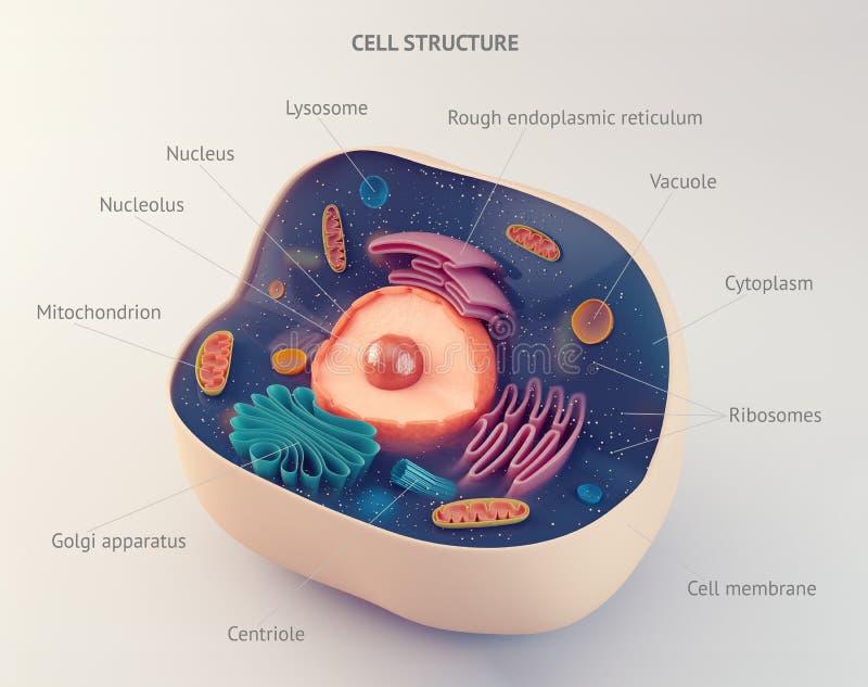 Estructura anatómica de la célula animal ilustración del vector