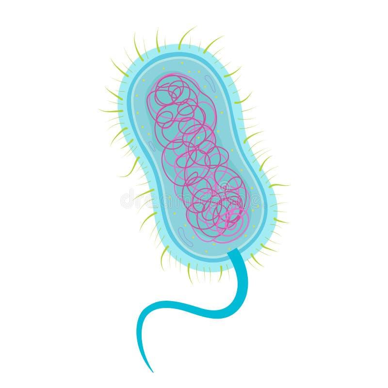 Estructura de célula de las bacterias libre illustration