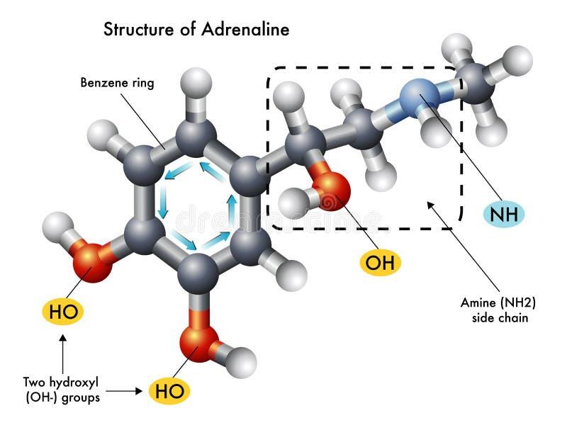 Estructura de la adrenalina ilustración del vector
