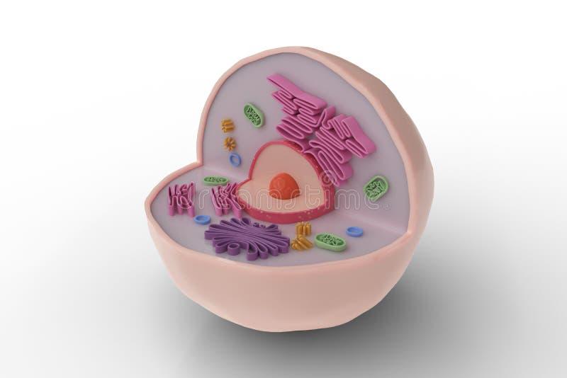 Estructura de la anatomía de la célula humana aislada en el fondo blanco 3D rindió la ilustración stock de ilustración