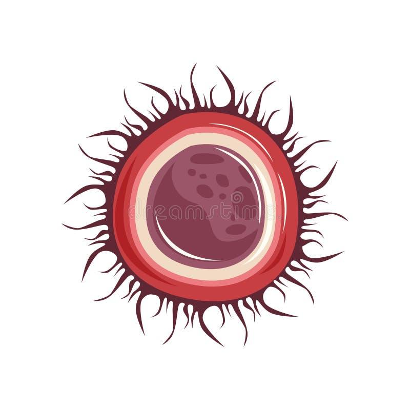 Estructura de la célula femenina del huevo del huevo Icono del sistema reproductivo humano ilustración del vector