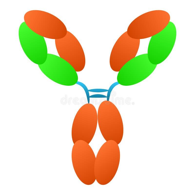 Estructura de la molécula de la inmunoglobulina del anticuerpo stock de ilustración
