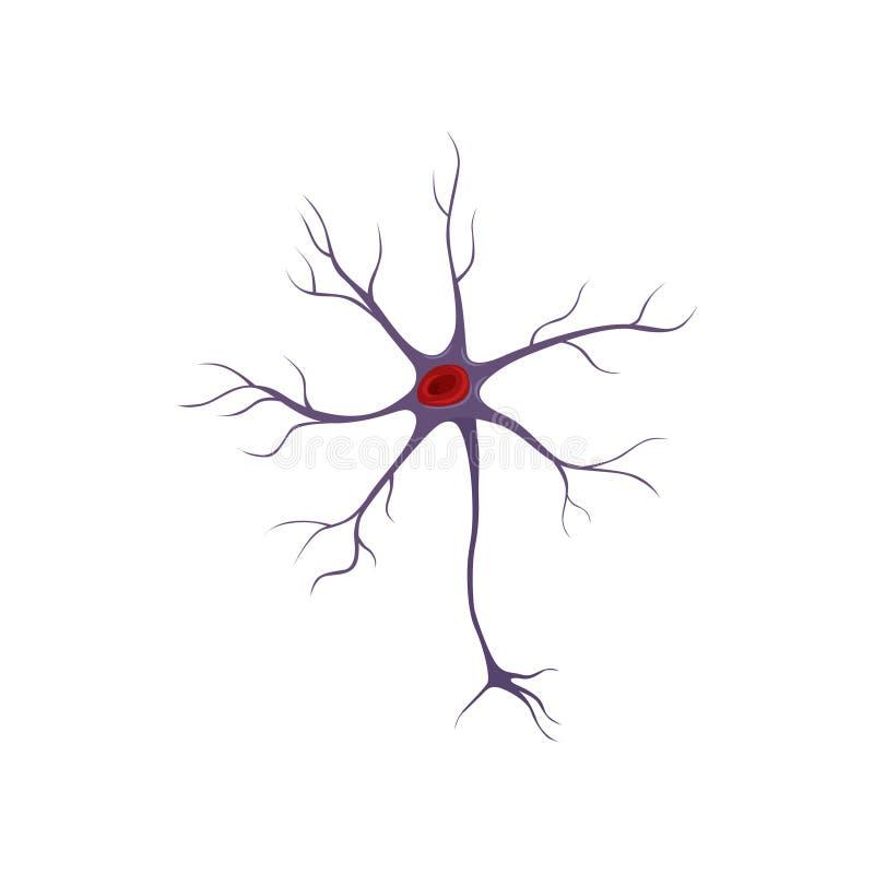 Estructura de la neurona, célula nerviosa Concepto de la anatomía y de la ciencia Icono en estilo plano Diseño plano del vector p ilustración del vector