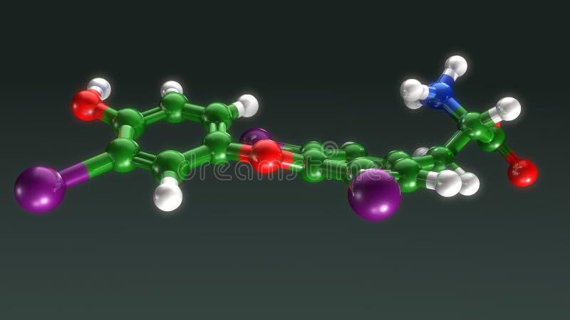 Estructura de la tiroxina libre illustration