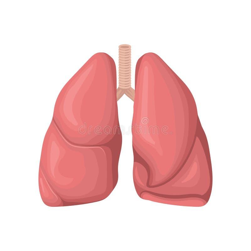 Estructura de los pulmones humanos Concepto de sistema respiratorio Órgano interno humano Elemento plano detallado del vector par ilustración del vector