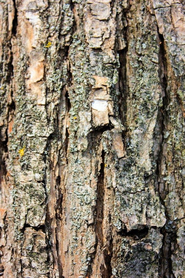 Estructura de madera imagen de archivo
