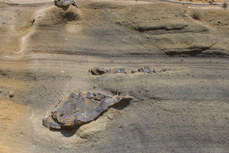 Estructura de piedra porosa del fondo del origen volcánico, color amarillo-gris fotografía de archivo