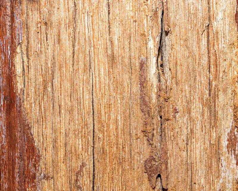 Estructura de un viejo tablero previsto con los rastros de pintura y de suciedad Madera con defectos foto de archivo