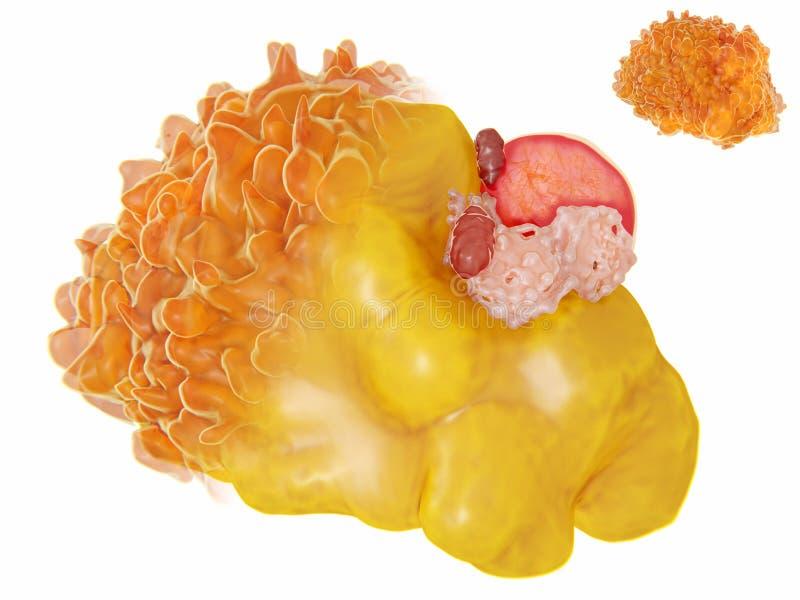 Estructura de una célula gorda libre illustration