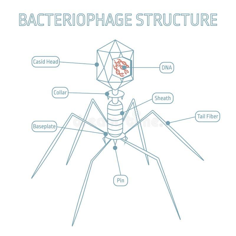 Estructura del bacteriófago aislada en el fondo blanco stock de ilustración