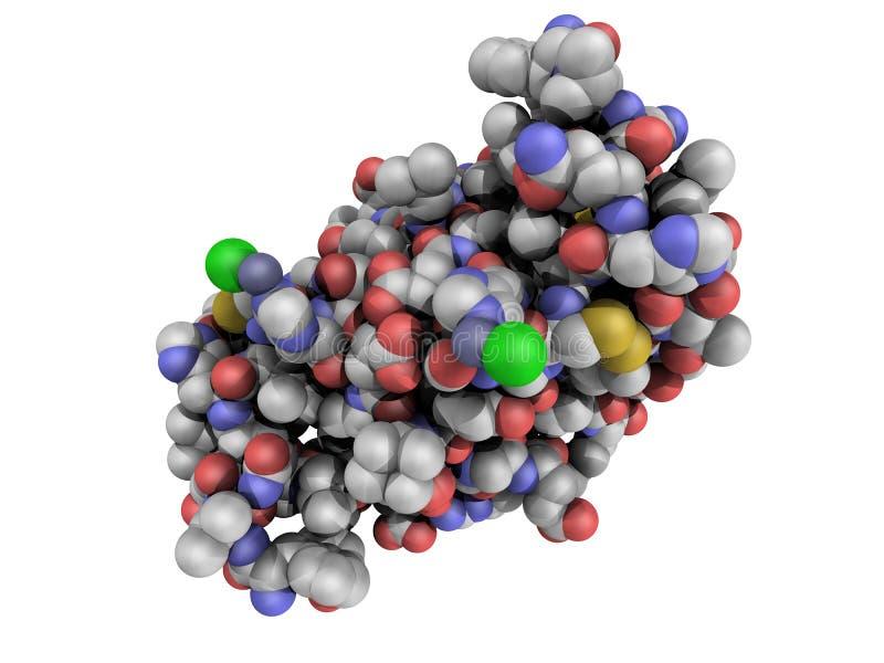 Estructura química de una molécula humana de la insulina stock de ilustración