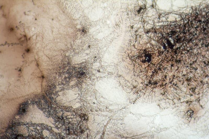 Estructuras de Microcrystal en colorante secado imágenes de archivo libres de regalías