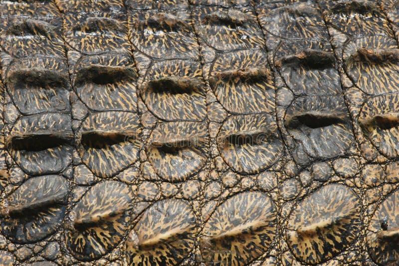 Estructuras del Pachyderm del cocodrilo fotografía de archivo libre de regalías