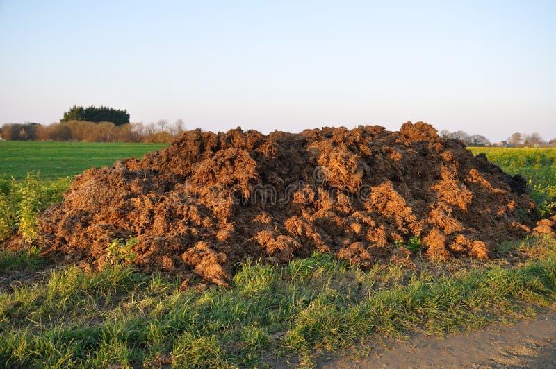 estrume da vaca em um campo imagens de stock