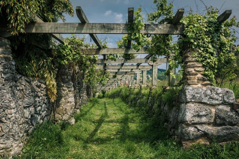 Estrutura antiga para crescer uvas na reserva da biosfera de Urdaibai no país Basque fotos de stock