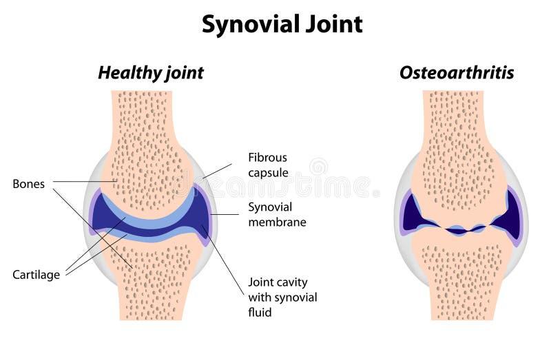 Estrutura da junção Synovial ilustração do vetor