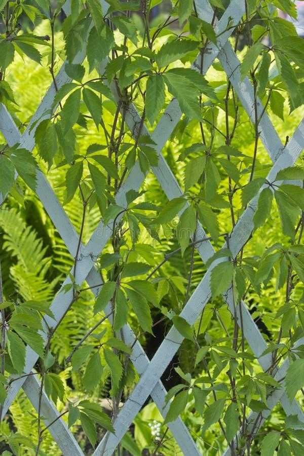 Estrutura de madeira coberto de vegetação com as plantas na luz do dia imagem de stock royalty free