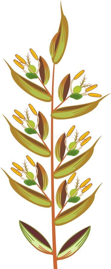 Estrutura do spikelet da inflorescência da grama ilustração do vetor
