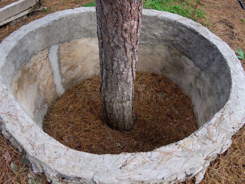 Estruturas protetoras da forma anular em torno da árvore imagens de stock royalty free