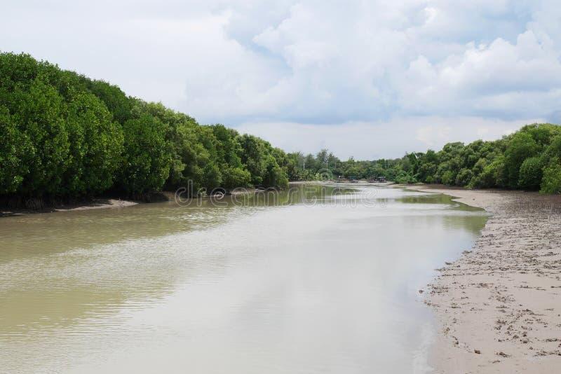 Estuaire de rivière, palétuviers image stock