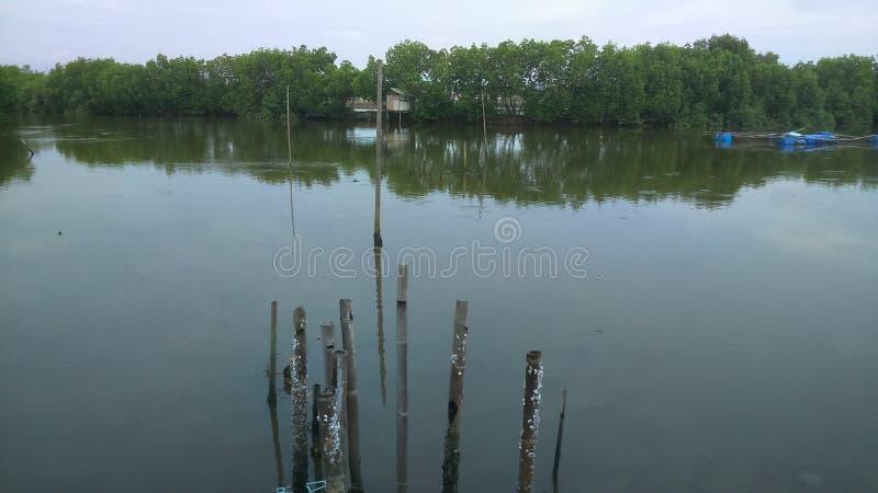 Estuario del mare fotografia stock