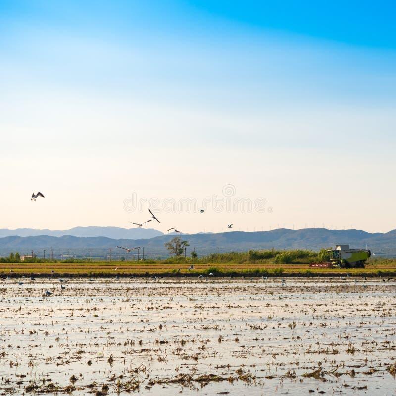 Estuario y humedales, Tarragona, Catalunya, España del delta del Ebro Co foto de archivo