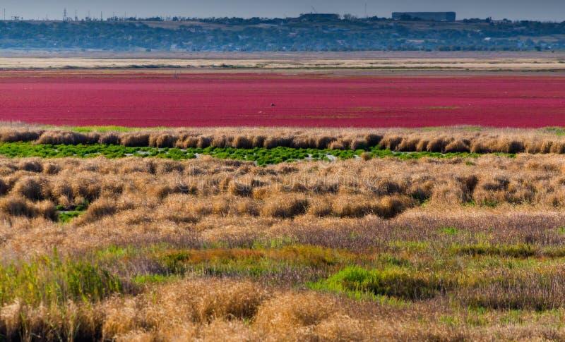 Estuarios secados con las plantas brillantes en el llano fotografía de archivo libre de regalías