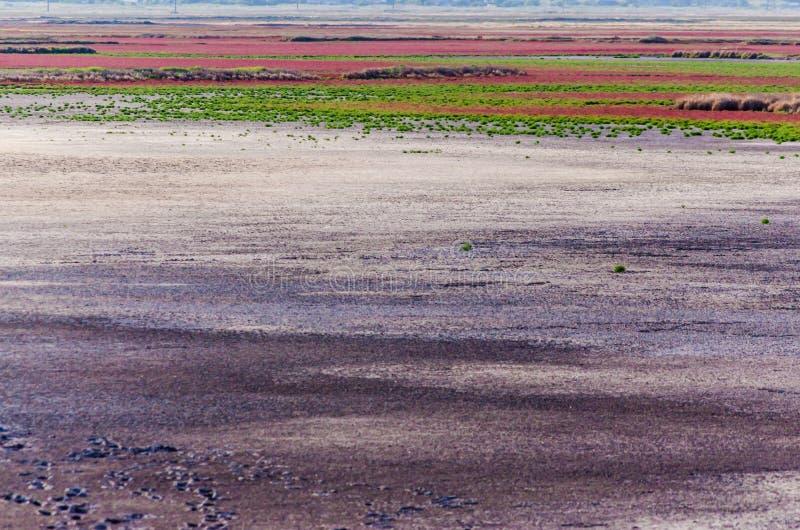 Estuarios secados con las plantas brillantes en el llano imágenes de archivo libres de regalías