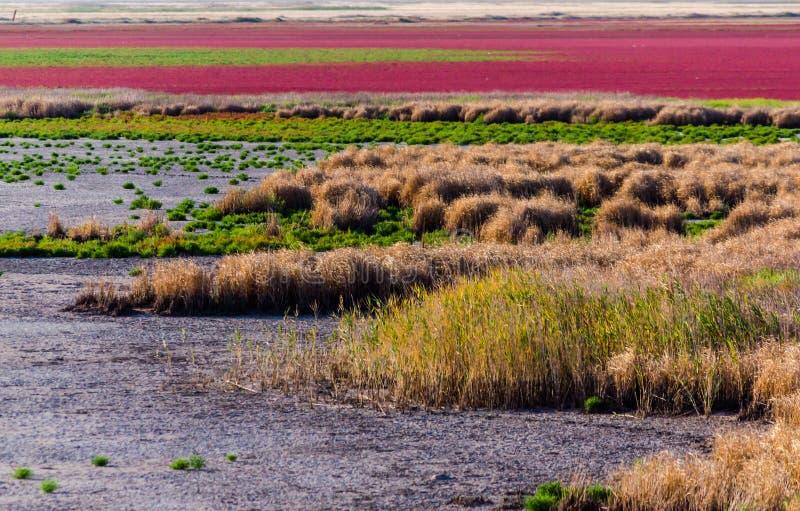 Estuarios secados con las plantas brillantes en el llano imagen de archivo libre de regalías