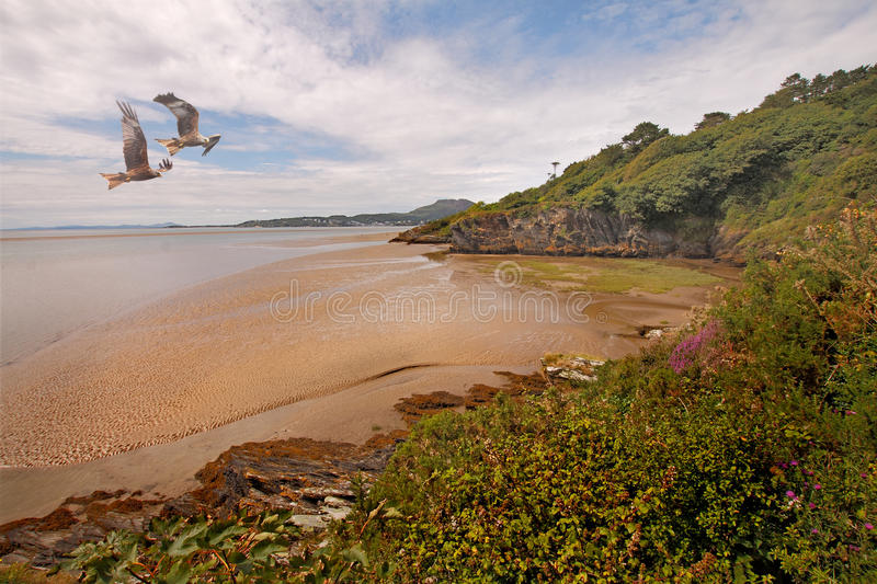 Estuary at Portmeirion royalty free stock images