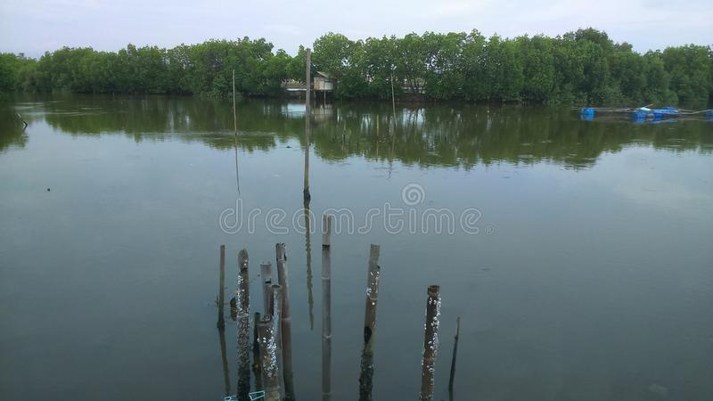 Estuary of the sea stock photo