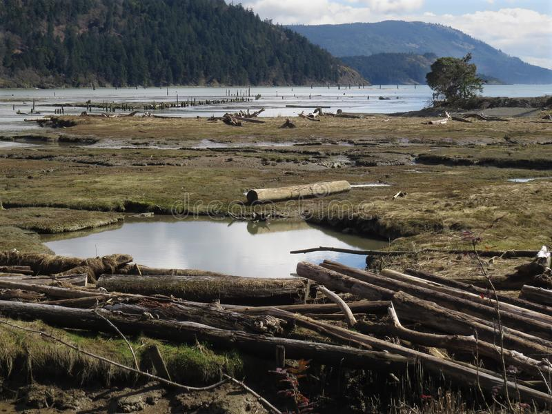 Estuary tidal flats. River estuary tidal flats at low tide with deadwood, logs, water pools, and bogs stock photo