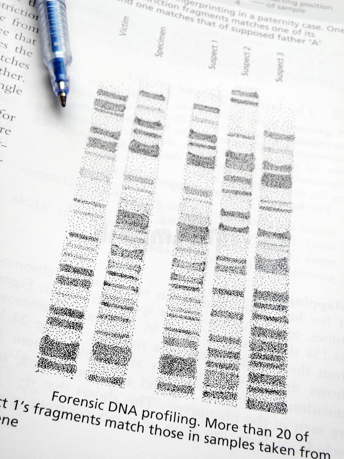 Estudando o perfilamento do ADN imagens de stock