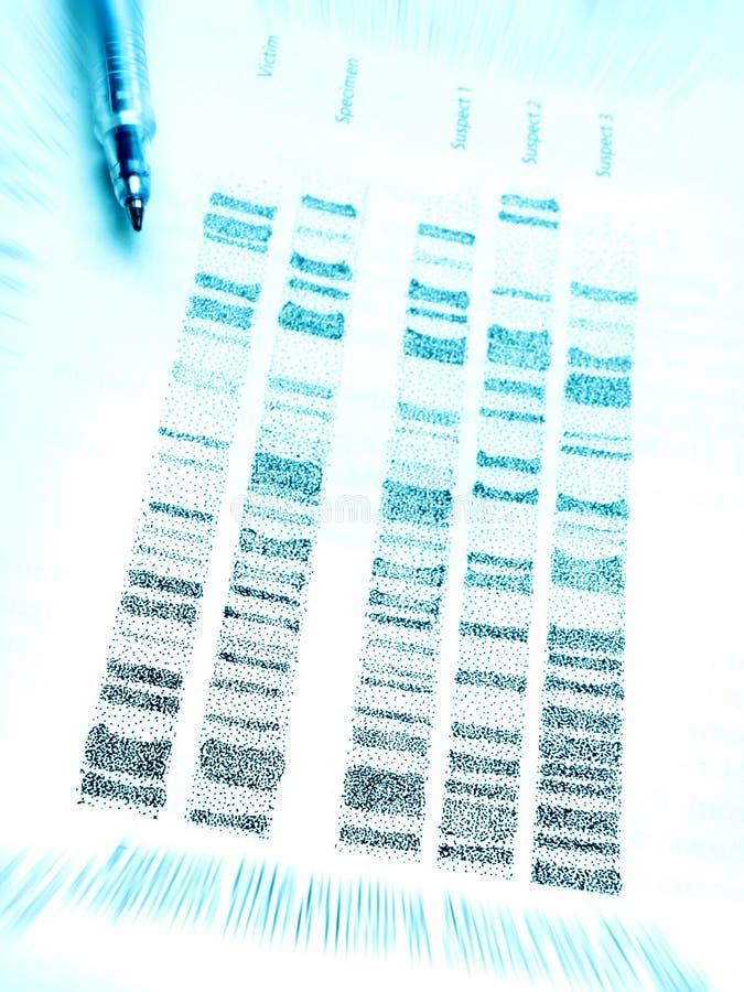 Estudando perfis do ADN imagem de stock