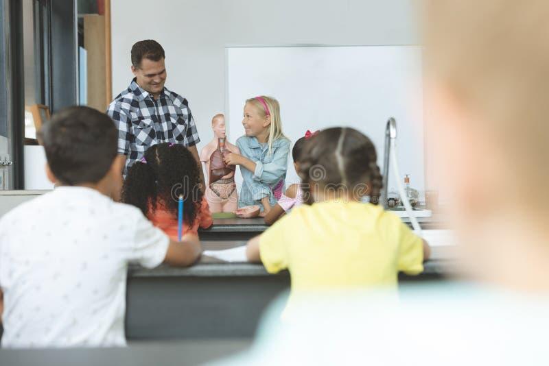 Estudante caucasiano que explica a outro crianças da escola o corpo humano com seu professor ao lado dela fotos de stock royalty free