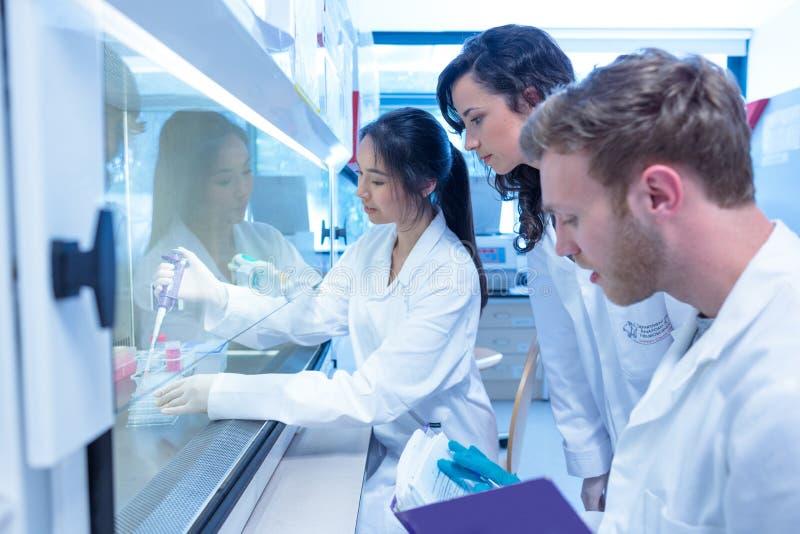 Estudantes da ciência que usam a pipeta no laboratório foto de stock