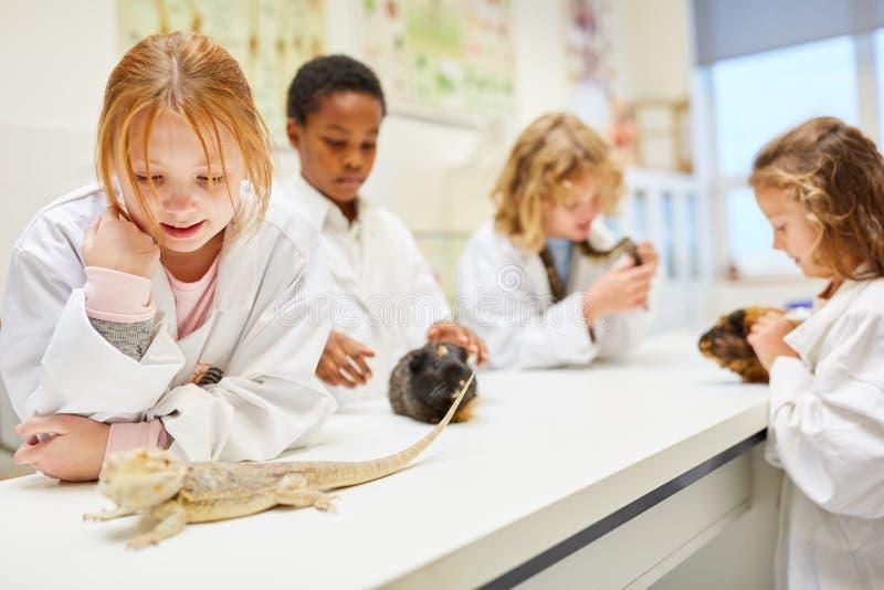 Estudantes na lição da biologia para observar animais imagens de stock royalty free