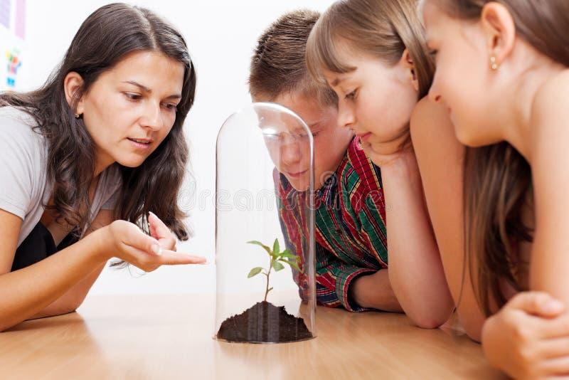 Estudantes que olham a planta dentro da estufa imagem de stock royalty free