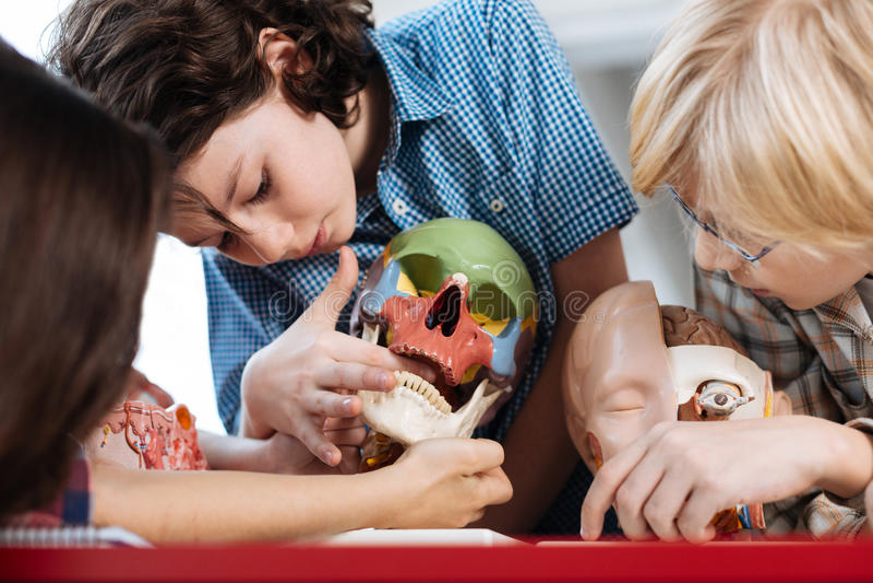 Estudantes vívidos que examinam a estrutura humana do osso imagem de stock