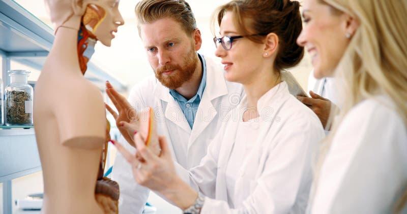 Estudiantes de la medicina que examinan el modelo anatómico en sala de clase imagenes de archivo
